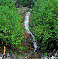 Scenic waterfall as it flows between two trees with bright green foliage in Mount Washington State Park. Gorham, New Hampshire.