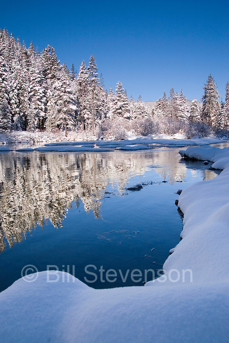 A photo of trees reflecting in the Truckee River, California after a fresh snow