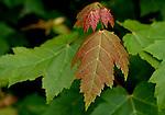 October 2009:  Autumn colors along Colorado's trails.