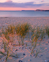 Sleeping Bear Dunes National Lakeshore, MI<br /> Evening light on summer dune grasses and white sand beach of Platte Bay with Empire Bluffs in the distance, Lake Michigan