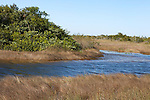 Sawgrass in the freshwater prairie and slough, Shark Valley area, Everglades National Park, Florida, USA