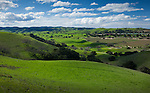 Rolling hills covered in the green grass of spring and vineyards. Santa Barbara County, CA.