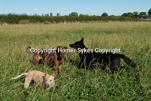Fosse Meadows at Stud Farm, North Kilworth Leicestershire August 2016