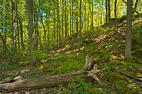 Hardwood forest in spring near Louth Falls.  Golden Horseshoe. Niagara Peninsula.<br />