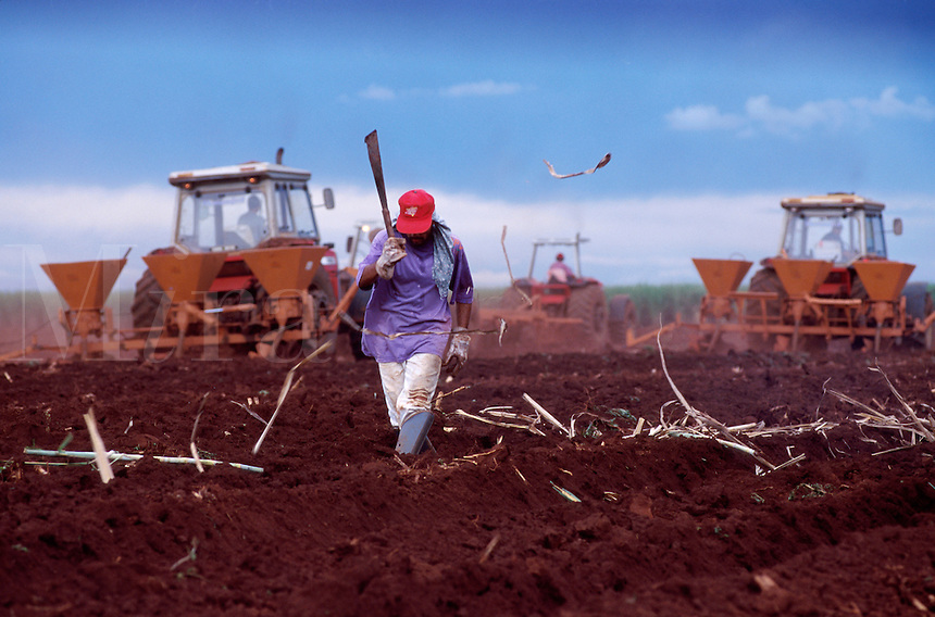 A Brazilian field worker harvests sugar cane. Brazil.