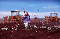 A Brazilian field worker harvests sugar cane. Brazil.