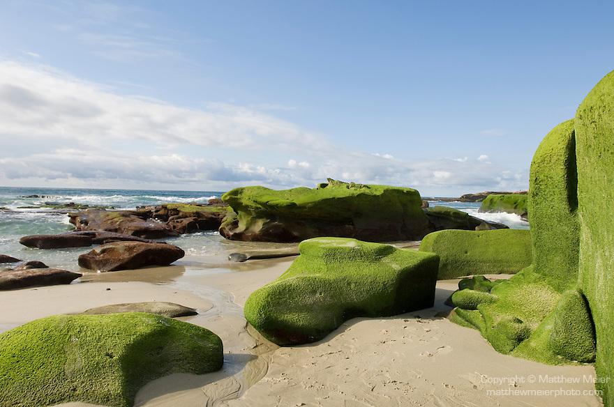 Windansea, La Jolla, California; algae on the rocks at low tide, late afternoon in winter
