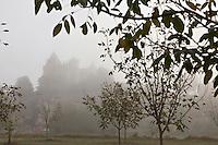 Europe/France/Aquitaine/24/Dordogne/Vallée de la Dordogne/Périgord/Périgord noir/Vitrac: Le Château de Monfort émergeant de la brume à l'aube, au premier plan une noyeraie