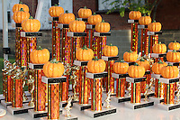 The Barnesville Pumpkin Festival 5K walk/run, September 29, 2012 at Barnesville Ohio.