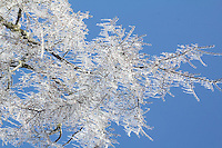 Ice storm in Arkansas December 2013.