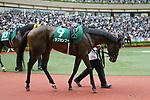 Love Kampf, AUGUST 19, 2018 - Horse Racing : Love Kampf is led through the paddock before the TV Nishinippon Corp.Sho Kitakyushu Kinen at Kokura Racecourse in Fukuoka, Japan. (Photo by Eiichi Yamane/AFLO)