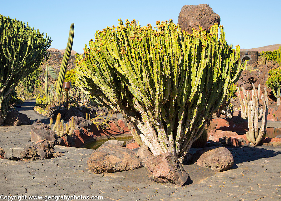 Jardin de Cactus designed by César Manrique, Guatiza, Lanzarote, Canary Islands, Spain
