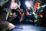 Santa Cruz Long-toed Salamander (Ambystoma macrodactylum croceum) biologist Rachel Tertes measuring salamander on night survey with volunteers, Monterey Bay, California