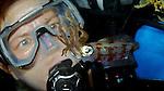 Caribbean Reef Squid and Diver, Islamorada, Florida