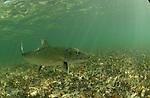 Bonefish film