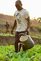 Malawi, Thyolo, NGO CARD Churches Action in Relief and Development, irrigation system for the village Samuti, farmer irrigate vegetable field with watering can  / Bewaesserungssystem im Dorf Samuti, Farmer bewaessern Gemuesefelder mit Giesskanne