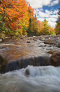 Gale River Forest - Autumn foliage along the Gale River in Bethlehem, New Hampshire.