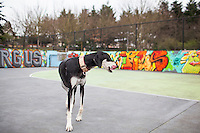 Dog images taken in a bike polo court in Seattle, WA