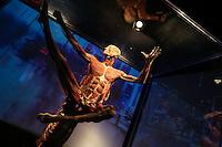 NOVA YORK, ESTADOS UNIDOS, 11.08.2015 - EXPOSIÇÃO-NEWS YORK - Vista da exposição Body Worlds Pulse de Gunther von Hagens que conta história do corpo humano no século 21 no Discovery Times Square Exposition em New York nos Estados Unidos nesta terça-feira, 11. (Foto: William Volcov/Brazil Photo Press)