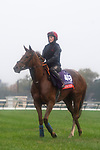 November 1, 2018: Princess Yaiza (IRE), trained by Gavin Cromwell, exercises in preparation for the Breeders' Cup Filly & Mare Turf at Churchill Downs on November 1, 2018 in Louisville, Kentucky. Jamey Price/Eclipse Sportswire/CSM