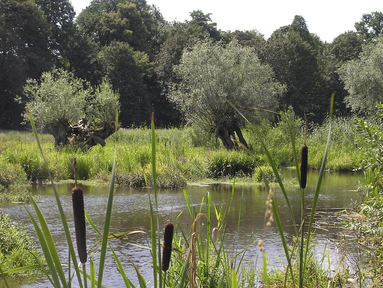Europa, DEU, Deutschland, Nordrhein Westfalen, Niederrhein, Krefeld, Naturschutzgebiet Riethbenden, Typische Landschaft, Das Naturschutzgebiet Riethbenden ist eine Reihung von Teichen und Tuempeln, die, zusammen mit ihren angrenzenden Biotopen, eine alte Fließrinne des Rheins in der Niederterrasse darstellen. Sie wurde wohl vor der Roemerzeit zum letzten Mal regelmaeßig durchstroemt. Der typische Verlandungsprozess der Wasserflaechen, der auch heute noch zu beobachten ist, erfolgt durch den hohen Naehrstoffgehalt des Wassers und das daraus resultierende Pflanzenwachstum, mit seinen sich auf dem Grund ablagernden Resten. Daraus resultieren artenreiche Feuchtgebietsvegetationen unterschiedlichster Auspraegung, die durch angrenzende Wald- und Gruenlandbereiche ergaenzt werden., Kategorien und Themen, Natur, Umwelt, Pflanzen, Pflanzenkunde, Botanik, Biologie, Naturschutz, Naturschutzgebiete, Landschaftsschutz, Biotop, Biotope, Landschaftsschutzgebiete, Landschaftsschutzgebiet, Oekologie, Oekologisch, Typisch, Landschaftstypisch, Landschaftspflege......[Fuer die Nutzung gelten die jeweils gueltigen Allgemeinen Liefer-und Geschaeftsbedingungen. Nutzung nur gegen Verwendungsmeldung und Nachweis. Download der AGB unter http://www.image-box.com oder werden auf Anfrage zugesendet. Freigabe ist vorher erforderlich. Jede Nutzung des Fotos ist honorarpflichtig gemaess derzeit gueltiger MFM Liste - Kontakt, Uwe Schmid-Fotografie, Duisburg, Tel. (+49).2065.677997, ..archiv@image-box.com, www.image-box.com]