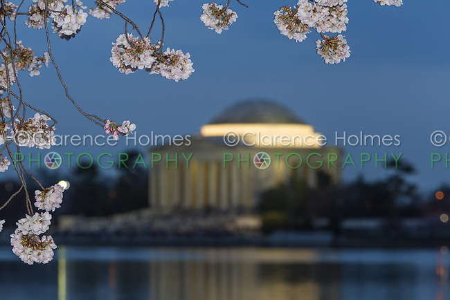 Yoshino cherry tree blossoms frame the Jefferson Memorial on the Tidal Basin at twilight in Washington, DC.