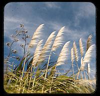 Flax & Pampas