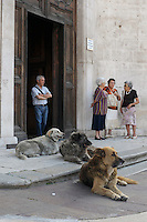 Cani abbandonati dopo il terremoto de L'Aquila  e adottati dalla popolazione.Dogs abandoned after the earthquake in L'Aquila and adopted by the population.Chiesa Santa Maria del Suffragio, detta delle Anime Sante. Sec XVIII