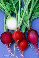 HS32-065x  Radish - Easter Egg variety