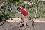 Venezia - Isola della Giudecca. All'interno della Casa di Riposo delle Zittelle si trovano due ettari di giardino coltivati e mantenuti dai ragazzi dell' associazione Spiazzi.
