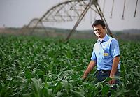 Inhauma_MG, Brasil...Gestao no campo na Fazenda Sao Joao. A fazenda e a terceira maior produtora de leite do Brasil, com 15 milhoes de litros por ano. A primeira em MG. Tem 1.170 hecatres, e capacidade de armazenagem para 22 mil toneladas de alimentos para o gado. Na foto, Paulo Henrique Garcia, Gerente Geral da fazenda, no milharal em Inhauma, Minas Gerais...Field management in the iSao Joao Farm. The farm and the third largest producer of milk in Brazil, with 15 million gallons per year. The first in MG. 1170 has hecatres, and storage capacity to 22 million tons of food for cattle. In the photo, Paulo Henrique Garcia, general manager of the farm, in a cornfield in Inhauma, Minas Gerais...Foto: JOAO MARCOS ROSA / NITRO..