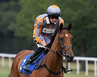 Spring Time Boy ridden by Tom Marquand goes down to the start of  The Crouch's Down Maiden Auction Fillies Stakes during Horse Racing at Salisbury Racecourse on 13th August 2020