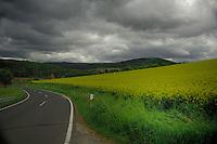 Overcast grey sky over crop of oilseed rape in Aschaffenburg area, Bavaria, Germany.
