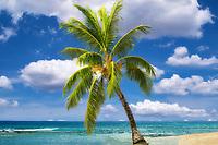 Palm tree and beach. Poipu, Kauai, Hawaii