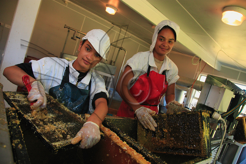 In Wongaparoa, the honey house of Whakaari International. It was built a few years ago, a big, impeccable room and an extraction line protected by a net against marauding looters. Four Maori women and one man work here during the season.