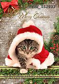 Isabella, CHRISTMAS ANIMALS, WEIHNACHTEN TIERE, NAVIDAD ANIMALES, paintings+++++,ITKE551893,#XA#