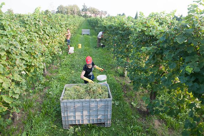 San Pietro di feletto (TV) Vendemmia dell'azienda vinicola Ruggeri