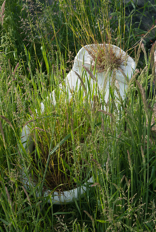 Grasses colonize an abandoned toilet bowl on an allotment site.