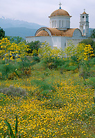 Aptera Church with wild Fennel in its grounds, Aptera, Crete, Greece