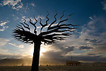 A small tree art installation at the Burning man arts and counter culture festival in the Black Rock desert near Gerlach, NV, 2009