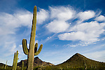 Saguaro cactus and clouds, Arizona