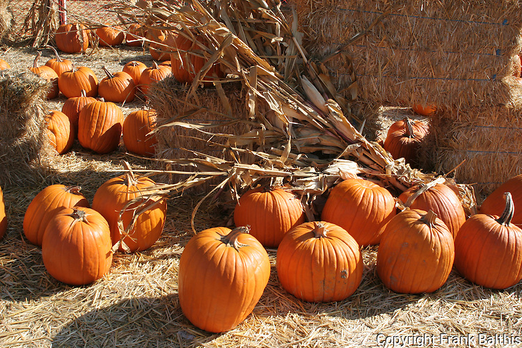 Pumpkins and straw in Hayward