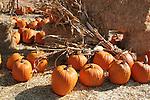 Pumpkins and straw in Hayward