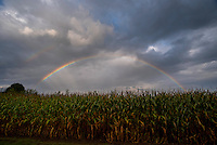 double rainbow over cornfield in South Haven, MI