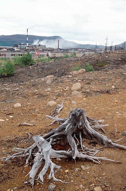 The remains of a tree in the 'dead zone' where virtually nothing grows, around the town of Monchegorsk. Kola Peninsula, NW Russia.