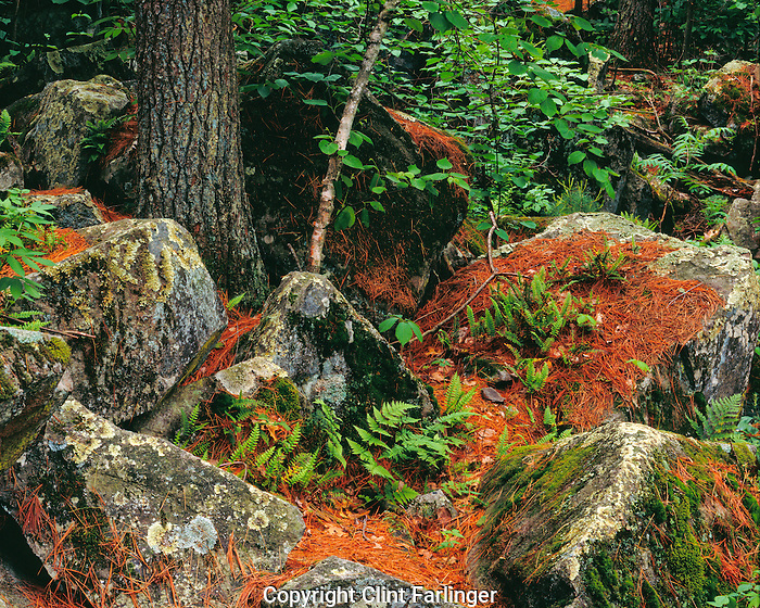 ferns and rocks, Interstate State Park, Wisconsin