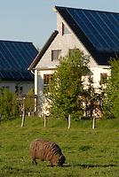 GERMANY Hamburg, houses with solar thermal collector for heating and warm water / DEUTSCHLAND Hamburg Bramfeld, Solarsiedlung Karlshoehe , Reihenhaeuser mit Solarkollektoren zum Heizen und fuer Warmwasserversorgung, Betrieb durch eon Hanse - Bürgerenergie, Buergerenergie