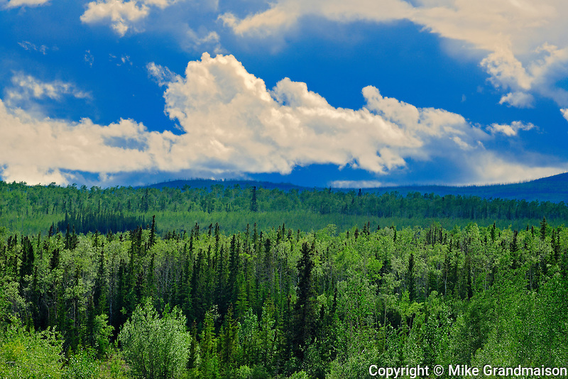 Boreal forest along the Klondike Highway<br /> Pelly Crossing <br /> Yukon<br /> Canada