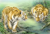 Kayomi, REALISTIC ANIMALS, REALISTISCHE TIERE, ANIMALES REALISTICOS, paintings+++++,USKH276,#A#