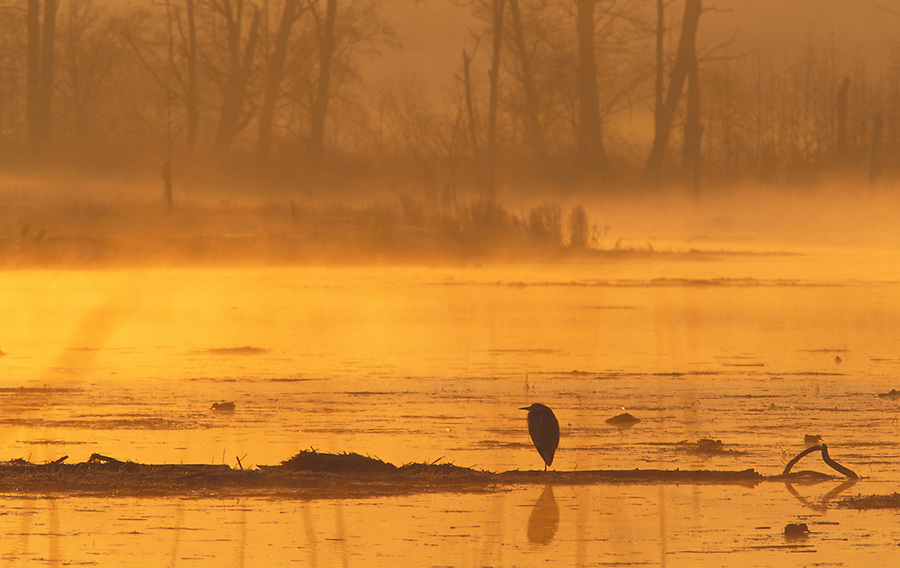 Heron silhouetted in estuary, Spencer Island, Everett, Washington